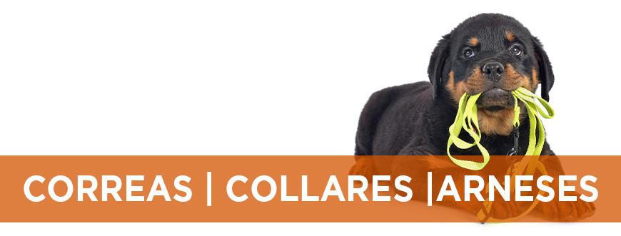 Correas, collares y arneses para perro