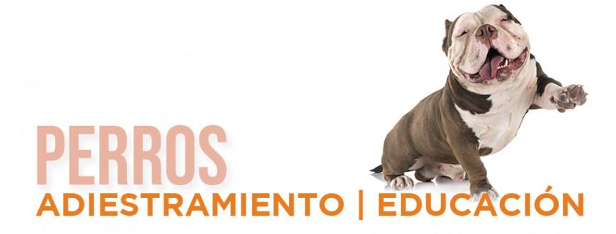 Adiestramiento y educación de perros