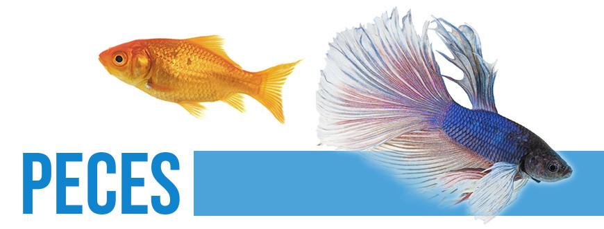 Tienda para peces | Acuarios | Acuarofilia