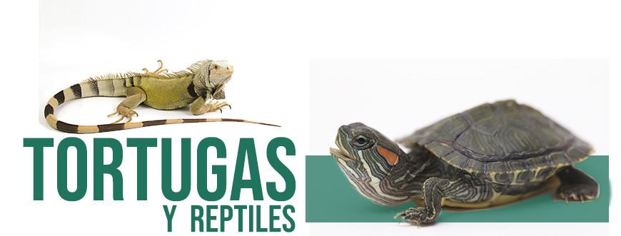 Tienda para tortugas y reptiles