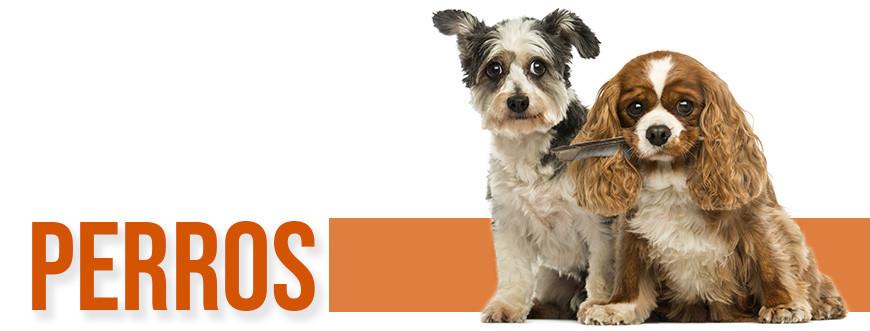 Tienda para perros on-line - todo para tu perro