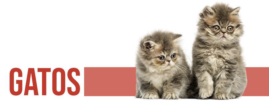 Tienda para gatos on-line - todo para tu gato