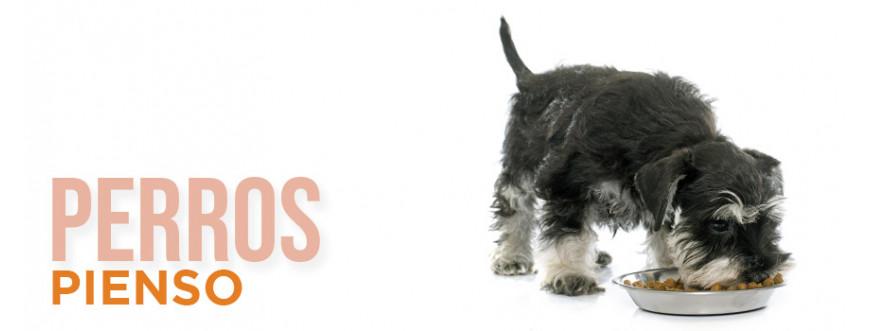 Pienso para perros con las mejores marcas y a los mejores precios