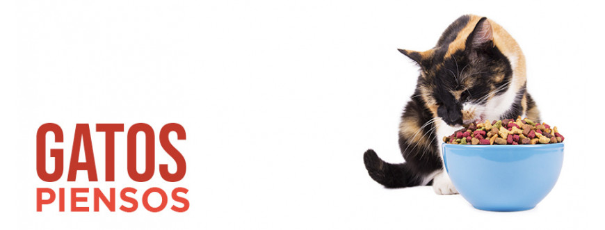 Pienso para gatos, alimento seco