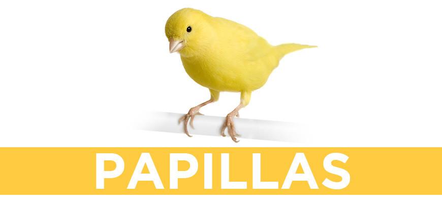 Papillas