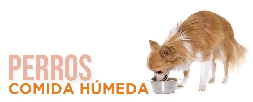 Comida Húmeda