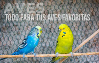Categoría de aves