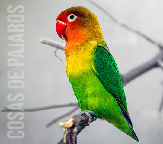 Categoría Aves